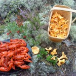 Läckerheter från skog och sjö